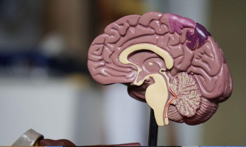 Brain-Health-1200x717